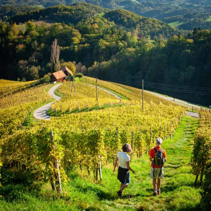 Walking in the vineyards near Maribor in Slovenia