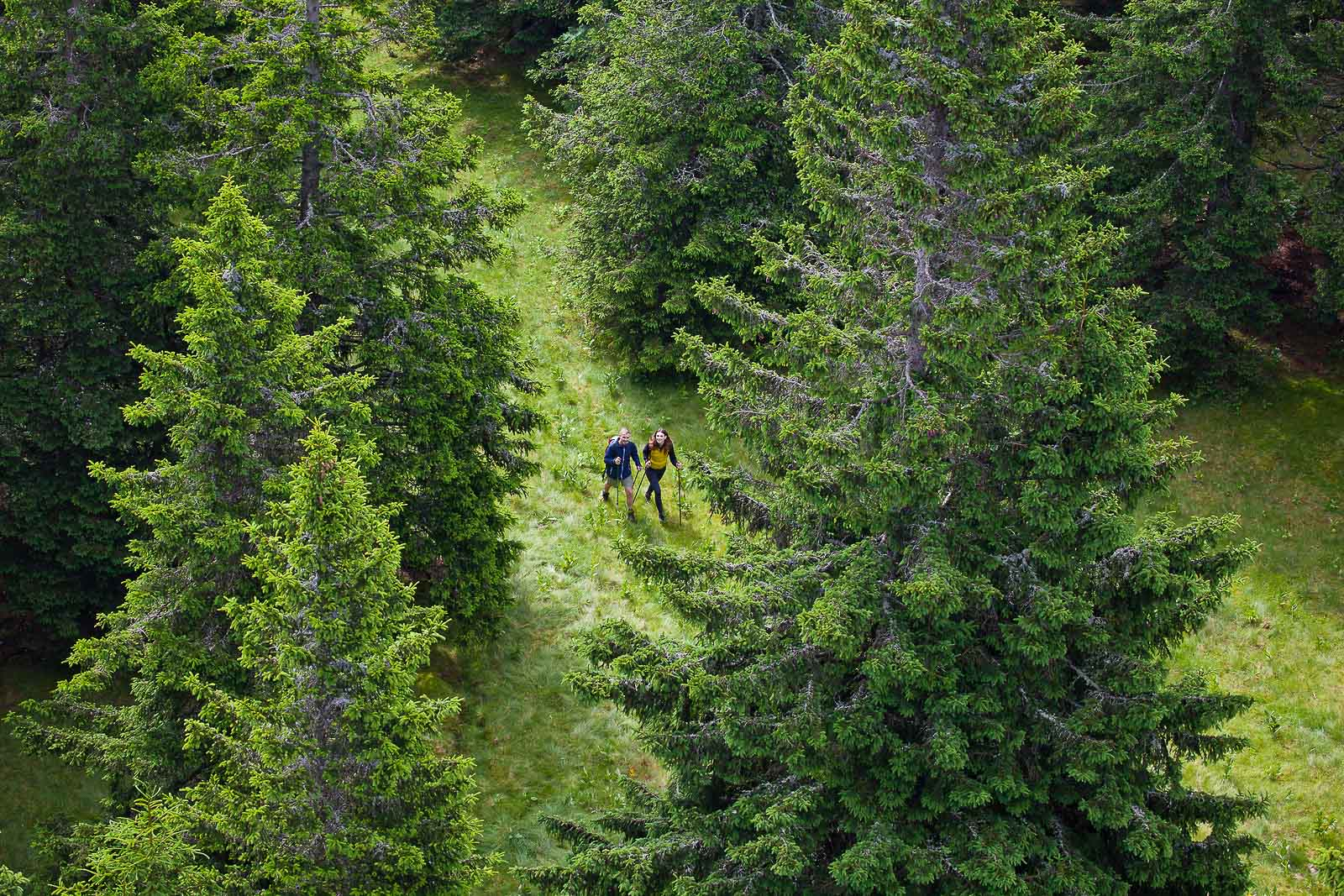 A couple on a hiking trip walking in the clearing in the middle of dense spruce forests of Rogla.