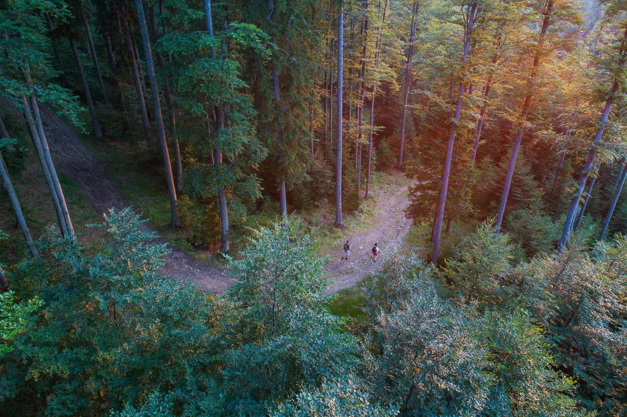 Hikers walking along the dirt road winding through the dense woods of Rogla on Pohorje hills.