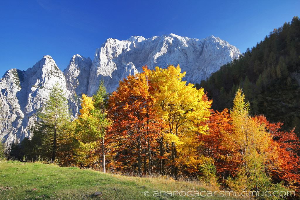 Brilliant autumn red and yellow trees on Vrsic mountain pass backed with majestic mount Prisojnik.