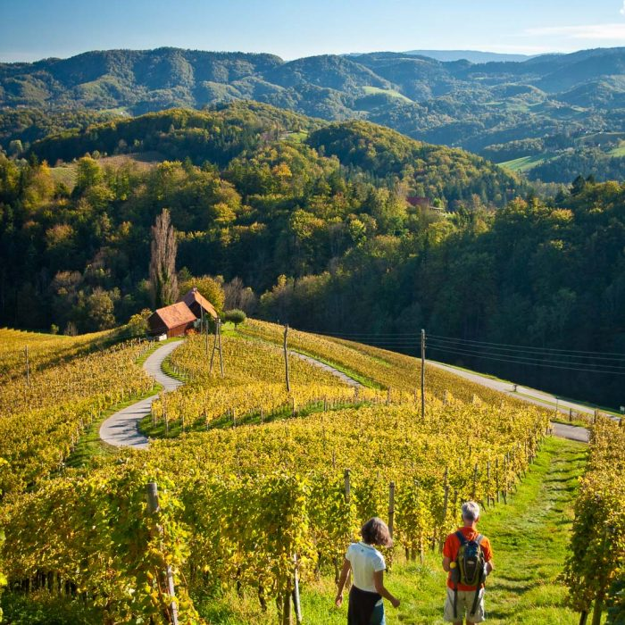 hiking-vineyards-maribor-slovenia-slotrips
