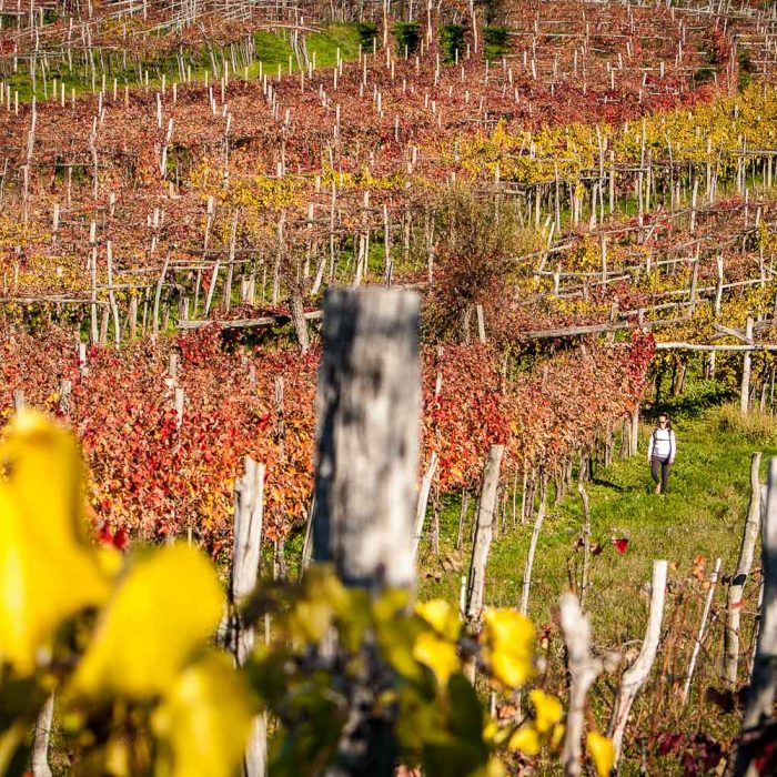walking-karst-slovenia-slotrips-vineyards